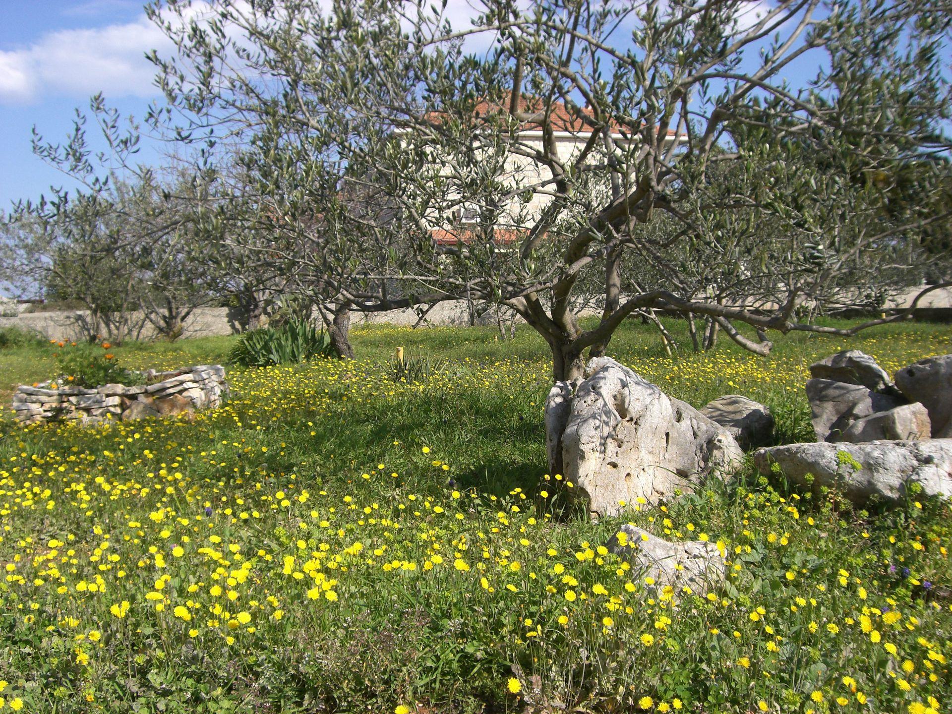35914 - Gornje Selo - Ferienwohnungen Kroatien
