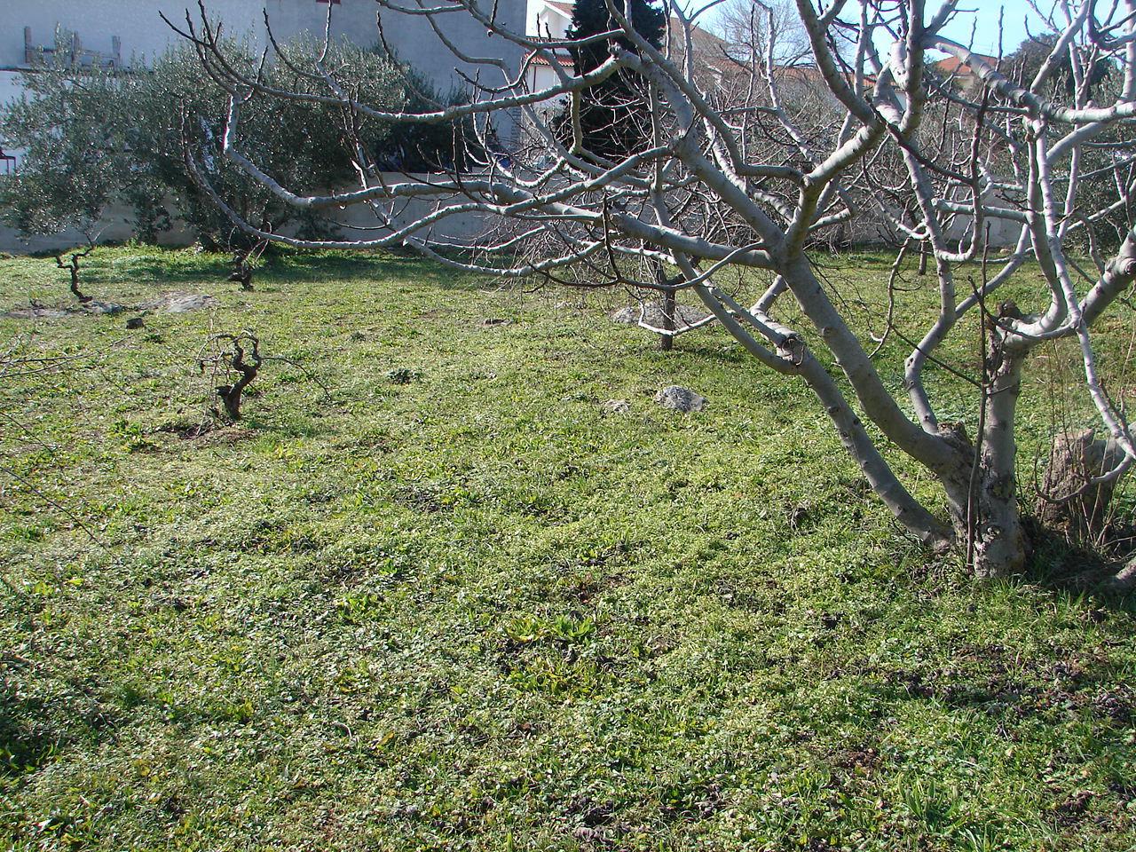 01606VODI - Vodice - Apartmanok Horvátország - kert