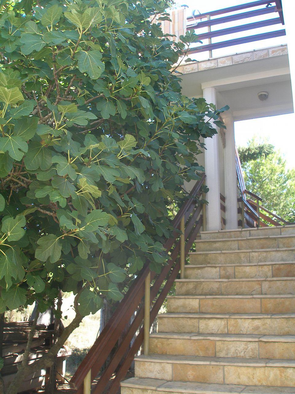 Holiday apartment 001PRIV A1(4+2) - Privlaka (742036), Privlaka, , Dalmatia, Croatia, picture 3